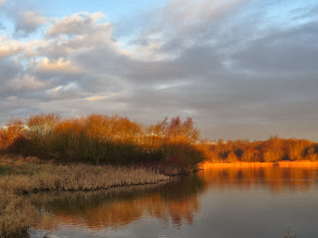Photo: Priorslee Lake The warm golden glow of the early low sun. (Ed Wilson)