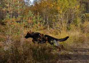 Photo: Ayla trener rundering på Evje, 8 mnd