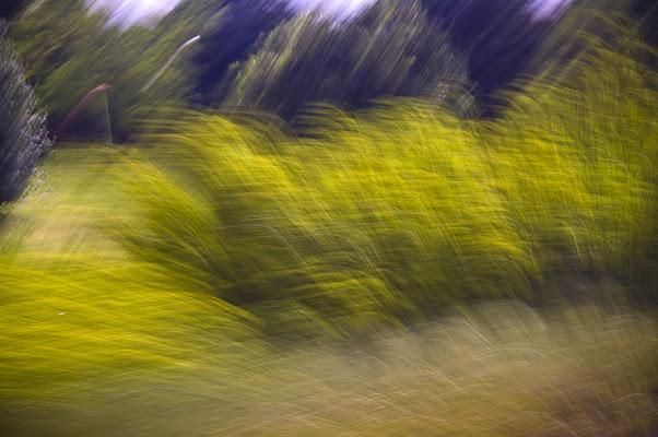 Vegetazione in Movimento di lcanest
