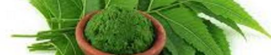 Veličanstvo neem (nim) in njegovih 8 super blagodejnih učinkov