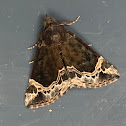 White-lined Snout moth