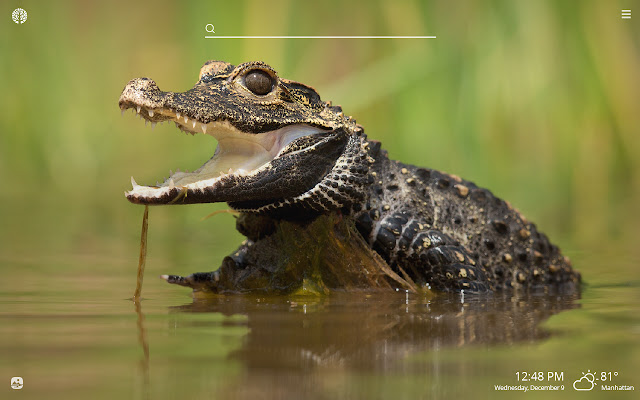 Crocodile HD Wallpapers New Tab Theme