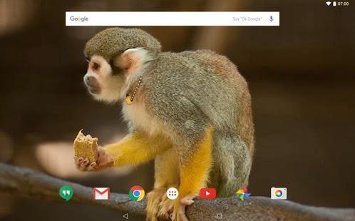 Squirrel Monkey live wallpaper - náhled