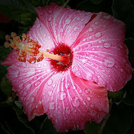 by Dorothy Fournier-Burns - Flowers Single Flower