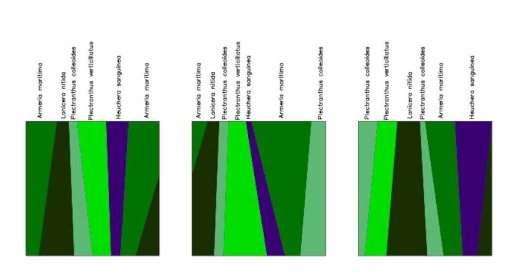 Diseño de los jardines verticales