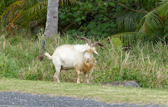 Photo: Billy Goat Gruff is looking quite intimidating!