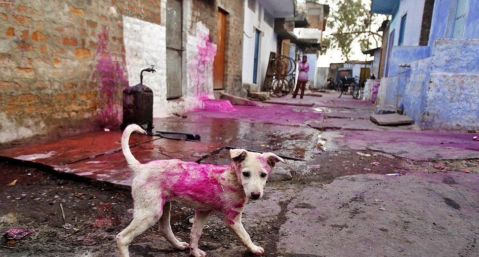 05-03-2020-irresponsible-behaviours-on-holi_stray_animals.jpg