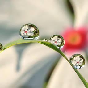 by Yenni Sumita - Abstract Water Drops & Splashes