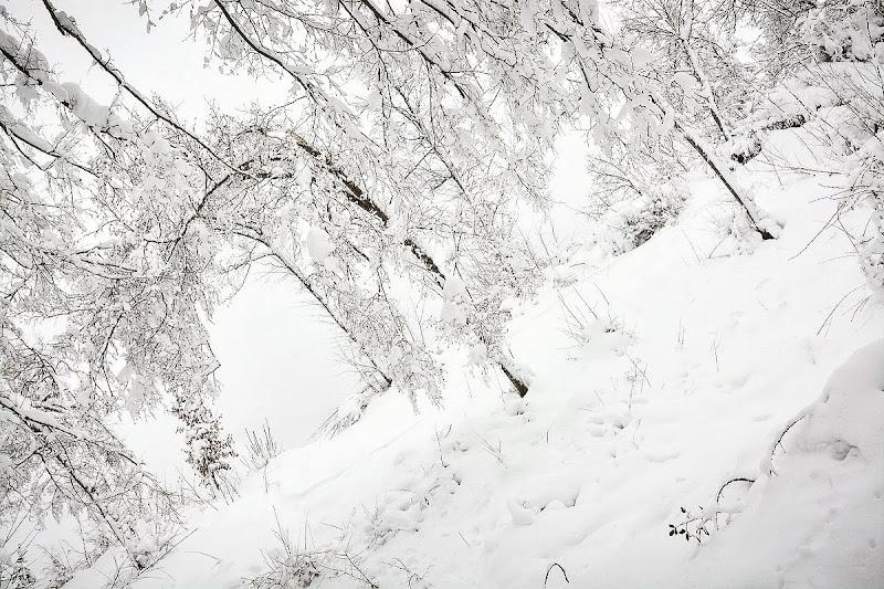 Ice di Luca Mandelli