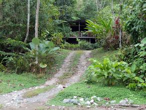 Photo: Bosque del Rio Tigre