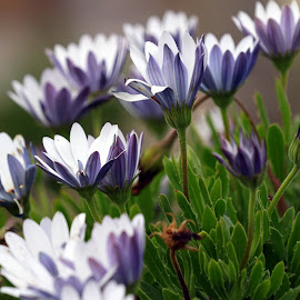 They born wild by Gil Reis - Flowers Flowers in the Wild ( macro, life, bio, nature, places, travel, flowers )