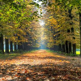 autumn path in the park by Fernando Ale - City,  Street & Park  City Parks