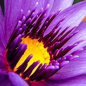 by Asher Jr Salvan - Nature Up Close Flowers - 2011-2013 (  )