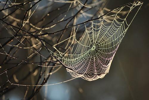 Webinar by Karyn Leong - Nature Up Close Webs (  )