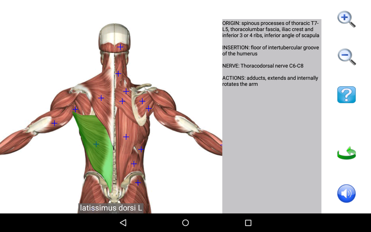 Visual Anatomy Free - Revenue & Download estimates - Google Play ...