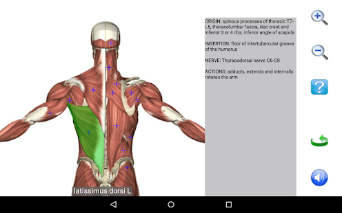App Visual Anatomy Free APK for Windows Phone