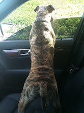 Photo: Kilo going for a car ride