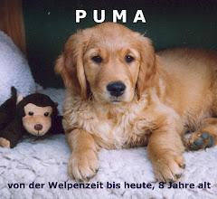Photo: Puma als Welpe - Winter 2003