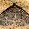 Tissue Moth