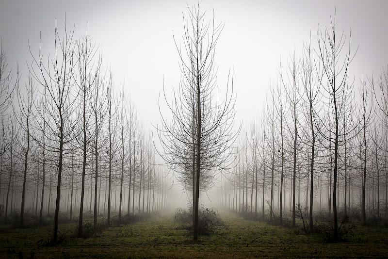 La nebbia di E l i s a E n n E