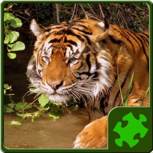 Animals Puzzle - Wild