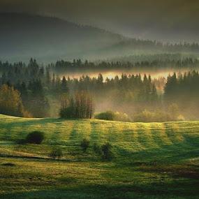 *** by Katka Kozáková - Landscapes Prairies, Meadows & Fields ( field, green, meadow, forest, sunlight,  )