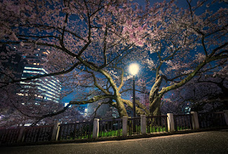 Photo: Sakura By Lamp Light  Finally got up a post with a bunch of my cherry blossom photos from around Tokyo this year. This was a favorite. You can see them all here:  http://lestaylorphoto.com/cherry-blossom-season-in-tokyo/  #japan #cooljapan #travel #sakura2015 #nikon #tokyo