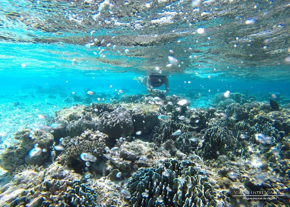 Explorando os ATÓIS E RECIFES DE CORAL nas Maldivas, próximos de Maafushi | Maldivas
