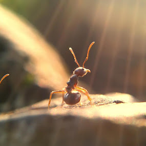 the ant by Teguh Teo - Instagram & Mobile Other