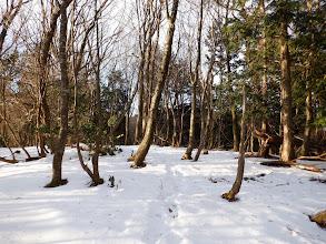 雪の上に足跡が
