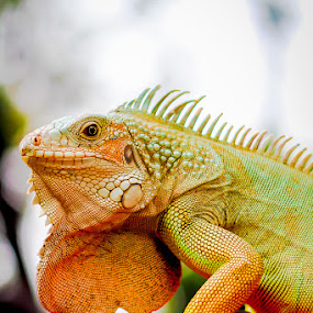 by Roland Roger - Animals Reptiles