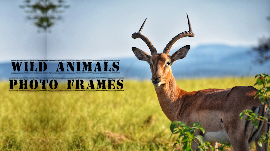 Download Wild Animal Photo Frames For PC Windows and Mac apk screenshot 5