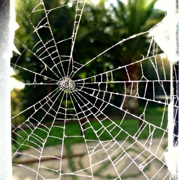 Broken Window di Anastasia Trossi