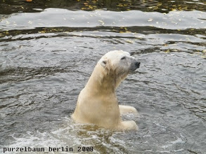 Photo: Lars schaut nach dem Pfleger und wartet auf Fleisch ;-)