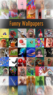 Funny Wallpapers 1
