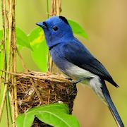 Small Bird Live Wallpaper