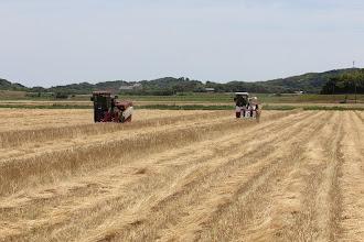 Photo: 5月下旬 大麦収穫