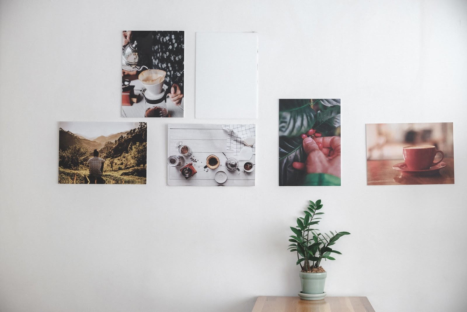 potted plant placed on a table with 5 different canvases on the wall