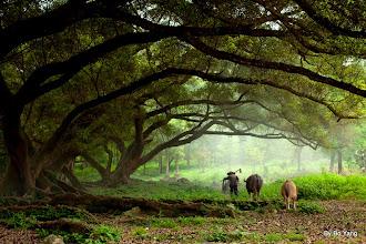 Photo: Xia Pu, Fujian Province, China https://picasaweb.google.com/102176750369556051031