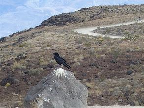 Photo: As the crow flies