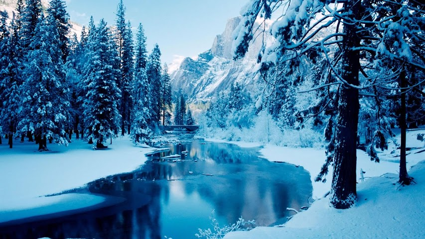 android Winter forest.Nature wallpaper Screenshot 6