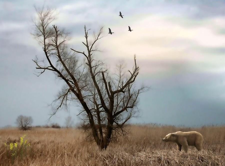 Bear Approaching by Dennis Granzow - Landscapes Prairies, Meadows & Fields