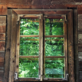 Old Window in a green light by Alin Gavriluta - Buildings & Architecture Architectural Detail (  )
