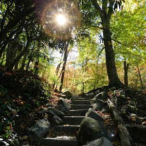 Stairway to nature.jpg