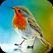 Suara Burung Lengkap
