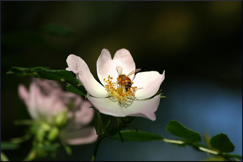 il fiore e l'ape di Fotodiale