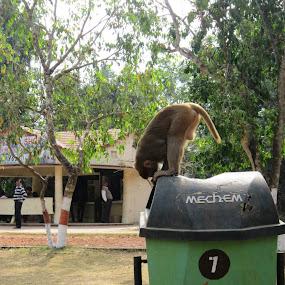 na by Prosenjit Biswas - Animals Other (  )