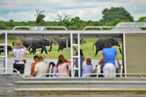 zambezi-queen-chobe-river-cruise.jpg - Passengers on Zambezi Queen take photos of a herd of migrating elephants along the Chobe River in Africa.