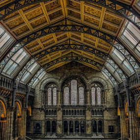 Natural History Museum by Katherine Rynor - Buildings & Architecture Public & Historical ( interior, arches, columns, windows, museum, architecture,  )