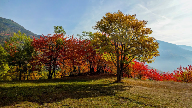 i dorati giorni d'autunno di POLNGU